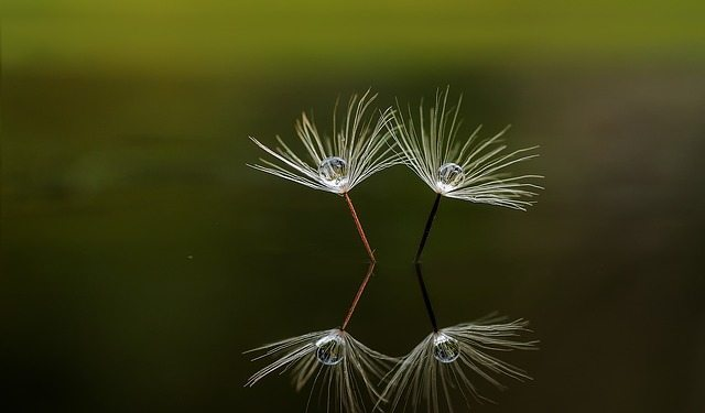seed reflection